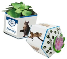 Garden Gems Paper Planters with Catnip Seeds