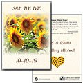 Sunflower 'Mammoth Grey Stripe' Seed Packets