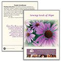 Purple Coneflower Seed Packets