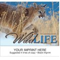 Animal Calendars, Wildlife, 13 Month