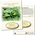 Parsley Seed Packets
