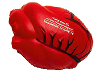 Anatomical Heart with Veins Stress Relievers