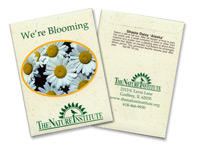Daisy Seed Packets