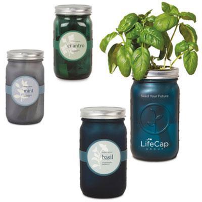 Modern Sprout Indoor Herb Garden Kits, Modern Sprout Indoor Herb Garden Kit