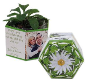 Garden Gems Paper Planters with Daisy Seeds